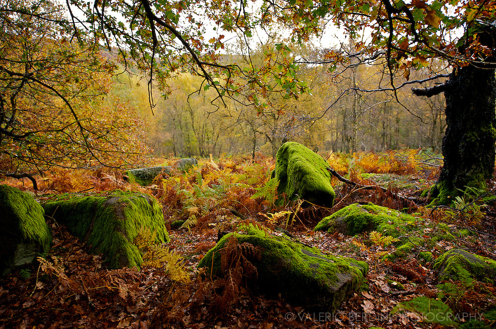 Padley Gorge .Peak District .Grindleford - UK