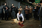 Sacrifice of a sheep during the celebration in the great market of Teheran.