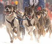 2010 Kalkaska Winterfest (images of all ind. racers avail. upon request)