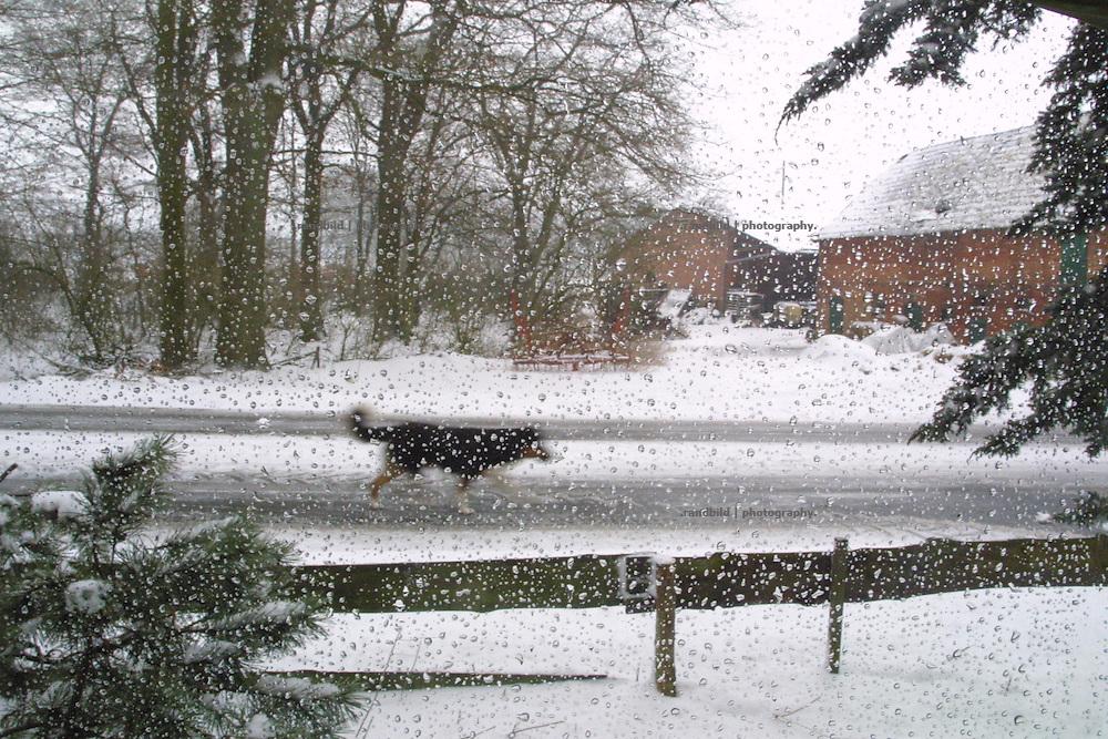 ice rain in a rural german village. Ein Hund läuft während eines Einregens im Frühjahr 2001 über eine Dorfstrasse in Zernien. Im Vordergrund sind Wassertropfen an dem Fenster, durch die der Fotograf blickte, festgefroren.