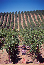 Stillwater Creek Vineyard, Royal City, Washington, US