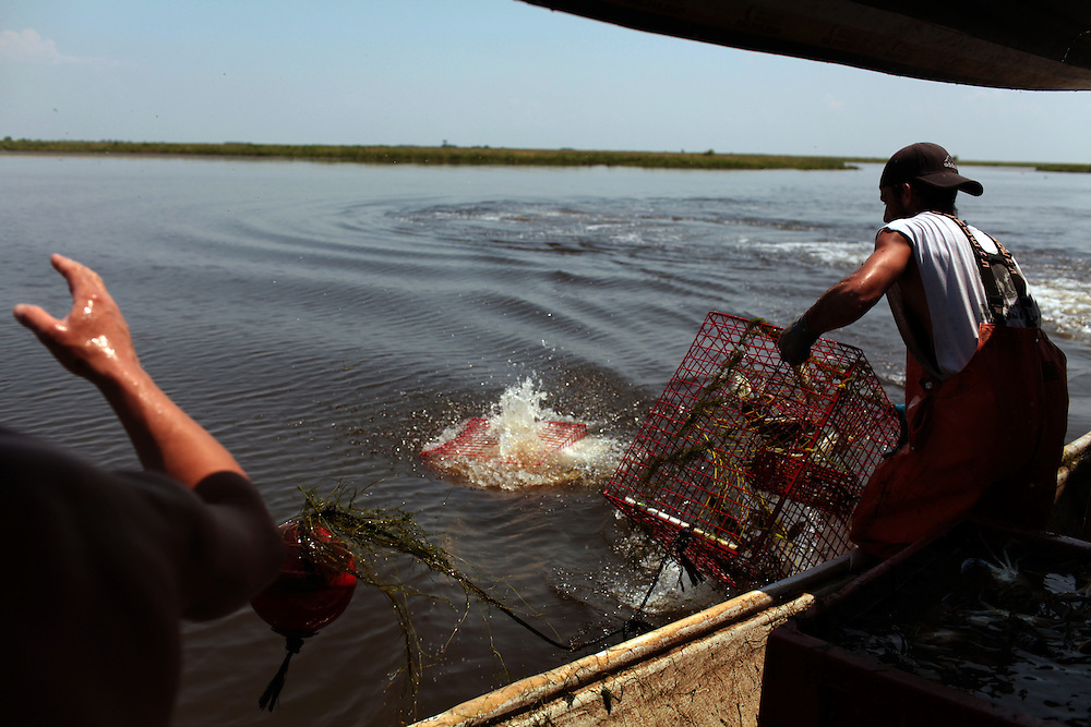 Captain Jason Melerine, left, assists deck hand Michael Labat, right, haul in crab pots from the boat in Plaquemines Parish, LA on May 25th, 2010. Local fisherman from St Bernard Parish were desperately fishing the surrounding bayou to earn as much income as possible before authorities shut down the crab fishing while the BP oil spill inched closer.