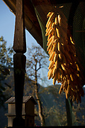 Drying maize in a rural Slovenian village, on 19th June 2018, in Bohinjska Bela, Bled, Slovenia.