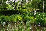 Iris sibirica 'Papillon', Iris pseudocorus  (Yellow Flag), Taxus baccata and a metal bird shaped sculpture in the Wave Garden at Pensthorpe Natural Park, Fakenham, Norfolk, UK