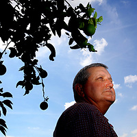 LAKE WALES, FL -- October 13, 2010 -- Citrus grower Marty McKenna poses for a portrait in one of his orange groves in Lake Wales, Fla., on Wednesday, October 13, 2010.  The housing bust left orange groves - which were scooped up by investors - unattended, overgrown and full with disease.  That disease is spreading to healthy, adjacent fields - leaving citrus growers scrambling to replant lost production.  .ORANGES