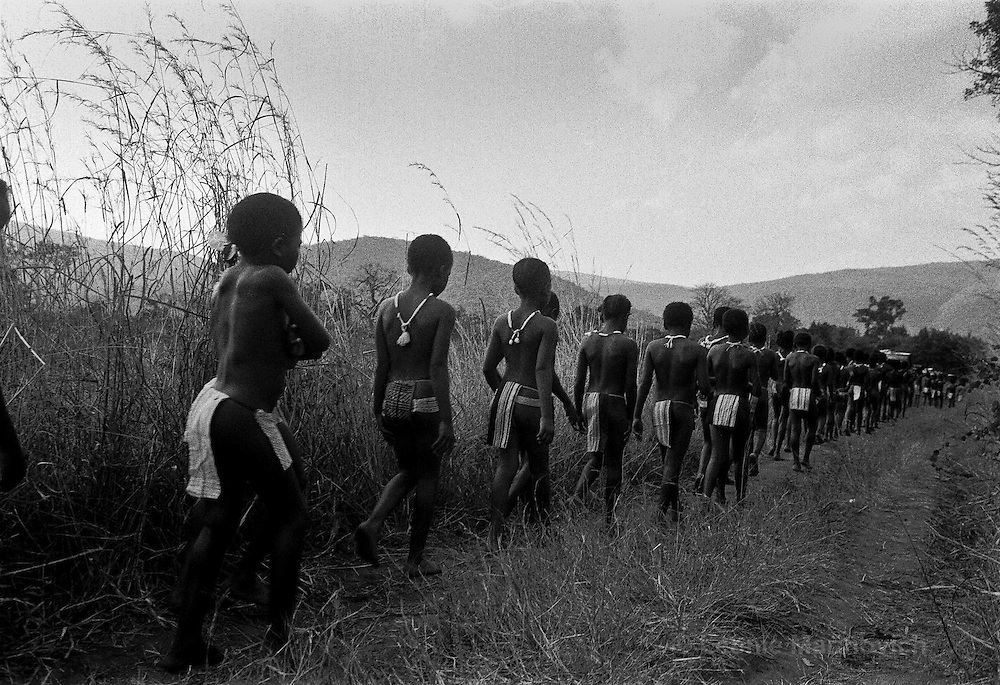IPLM0005 , South Africa, Venda, June 2001. Girls walk towards the area where male initiates are awaiting their food. These boys will remain hidden or the duration of the initiation period.