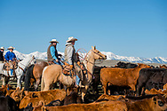 Branding, Hamm Ranch, Wilsall, MT, sorting cows from calves, Bridger Mountains, Randy Jackson, Garrett Hamm, Joe Sarrazin, Kurt Mraz
