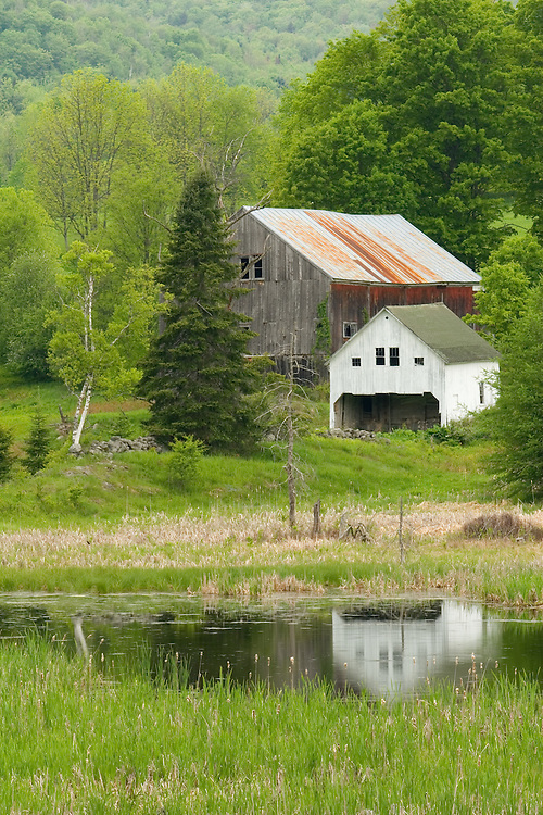 Barns reflecting in a farm pond in Ryegate, VT.