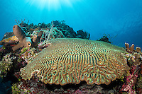 Brain Coral, Sponges, and Sun Rays<br /> <br /> Shot in Cayman Islands