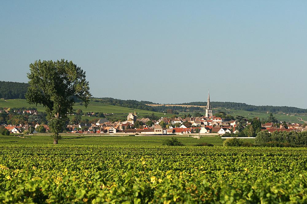 Looking towards Meursault in Burgundy France