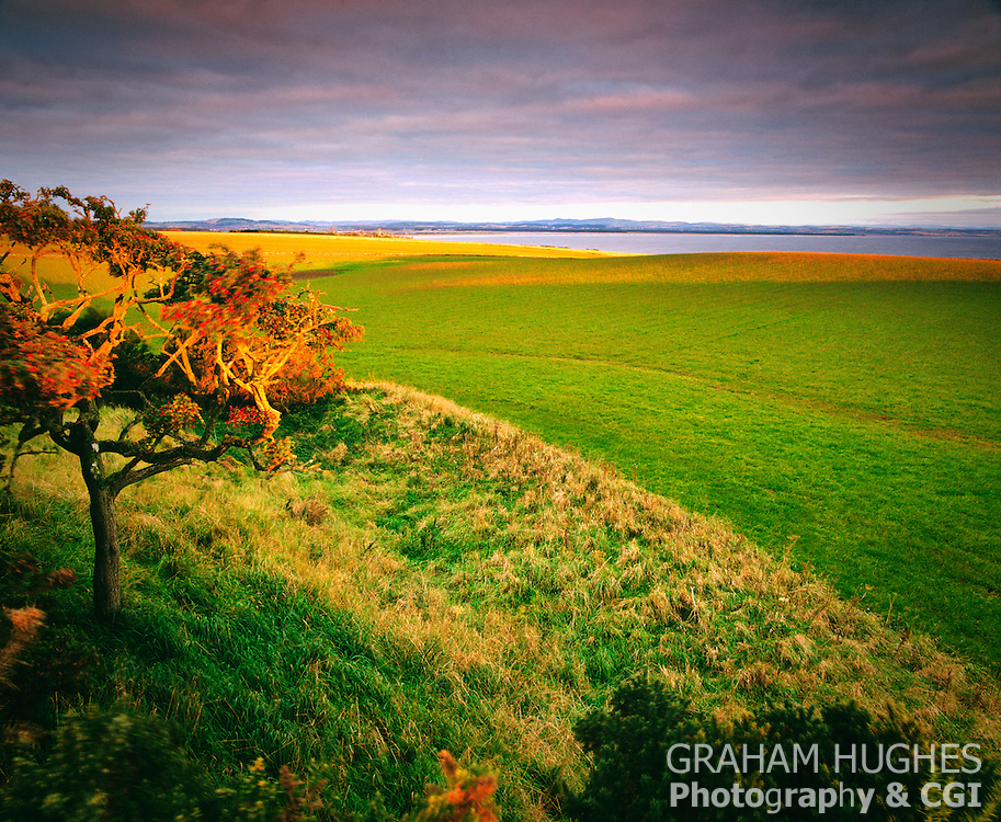 Tree on small hill, St Andrews in distance.