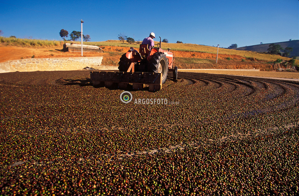Areado, Minas Gerais, Brasil. 07/2002. .Secagem de cafe. Trator espalhando os graos./ Drying out coffee. Tractor spreading the grains..Foto © Marcos Issa/Argosfoto