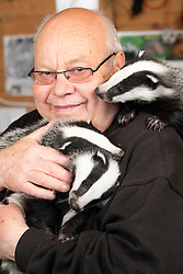 "© Licensed to London News Pictures. 24/4/2014. Nuneaton, Warwickshire, UK. Pictured, Badger cubs Scampy, Fidget and Dopey were found by a rambler when just four weeks old, they were hiding in a hedgerow, suffering from hypothermia and lack of food, their parents both nearby, shot dead. Taken to Warwickshire Wildlife Sanctuary in Nuneaton, they were brought back to life with love and care by Geoff Grewcock who runs the Sanctuary along with 25 volunteers. The baby cub badgers now 12 weeks old, have doubled in size, Geoff smiles, ""for some reason they have also taken a liking to my custard cream biscuits, they seem to love them and are currently getting through a packet a week""  Now checked by a local vet, inoculated and tagged, Geoff has found a home for them at  Secret World in Somerset, where they will join other badgers in purpose built sets and hopefully lead a full life. Picture shows Geoff Grewcock and the badgers. Geoff can be contacted on 02476 345243. Photo credit : Dave Warren/LNP"