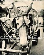 Mule<br /> 8x10 tintype on aluminum.