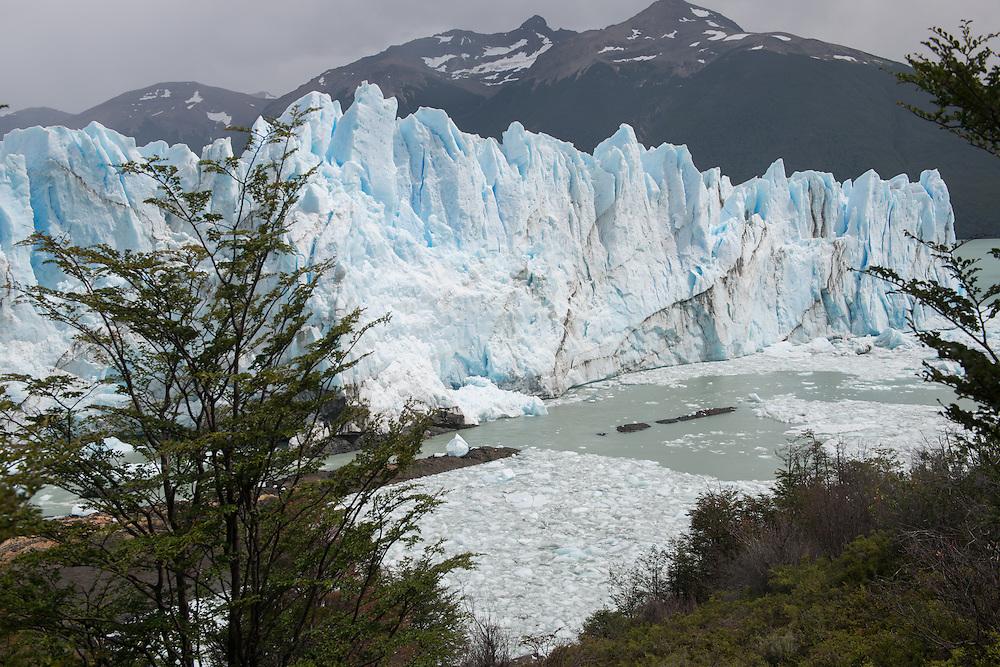 Forest and Glacier, Perito Moreno Glacier<br /> Los Glaciares National Park Argentina