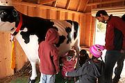 Students learn about milking cows at Tucson Village Farm, Tucson, Arizona, USA.
