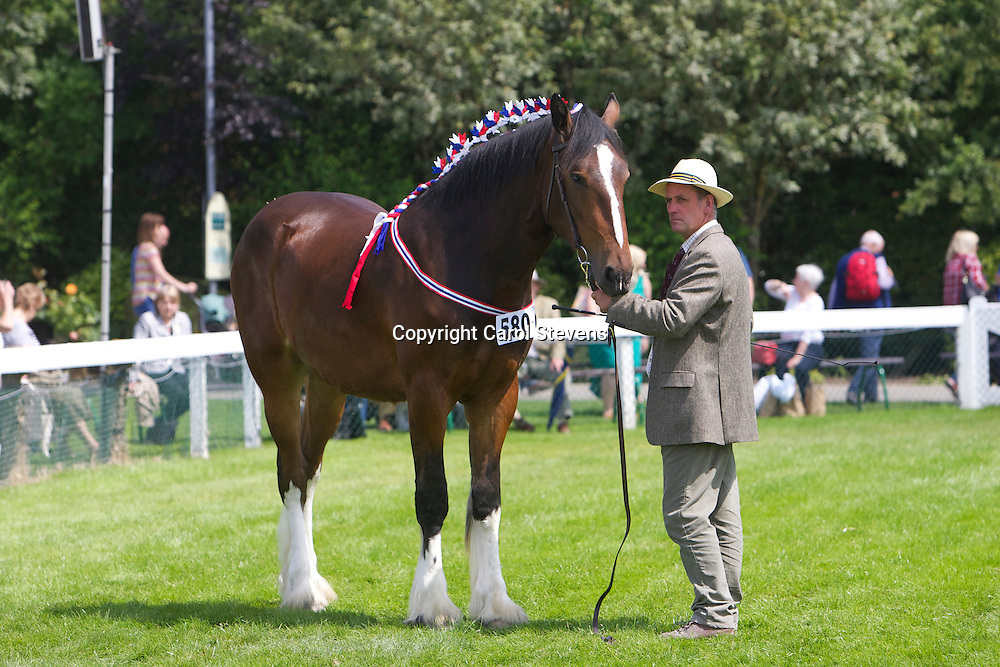 Mr W R Chapman's bay gelding  Batley Joshua<br />
