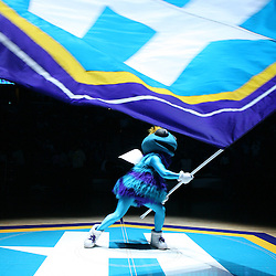 The New Orleans Hornets mascot, Hugo waves the Hornets flag during pregame introduction against the Phoenix Suns on February 26, 2008 at the New Orleans Arena in New Orleans, Louisiana.