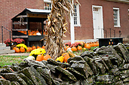 Harvest of pumpkins behind a stone fence at Shaker Village of Pleasant Hill KY in Mercer County near Harrodsburg KY
