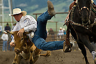 Steer Wrestler, Bulldogger, Montana High School Rodeo Finals 2009, Bozeman, Montana