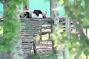 RONGCHENG, CHINA - SEPTEMBER 03: (CHINA OUT) <br /> <br /> Panda Nap With Block Of Ice<br /> <br /> A giant panda has a nap with a block of ice to beat the hear at a zoo on September 3, 2013 in Rongcheng, Shandong Province of China. <br /> ©Exclusivepix