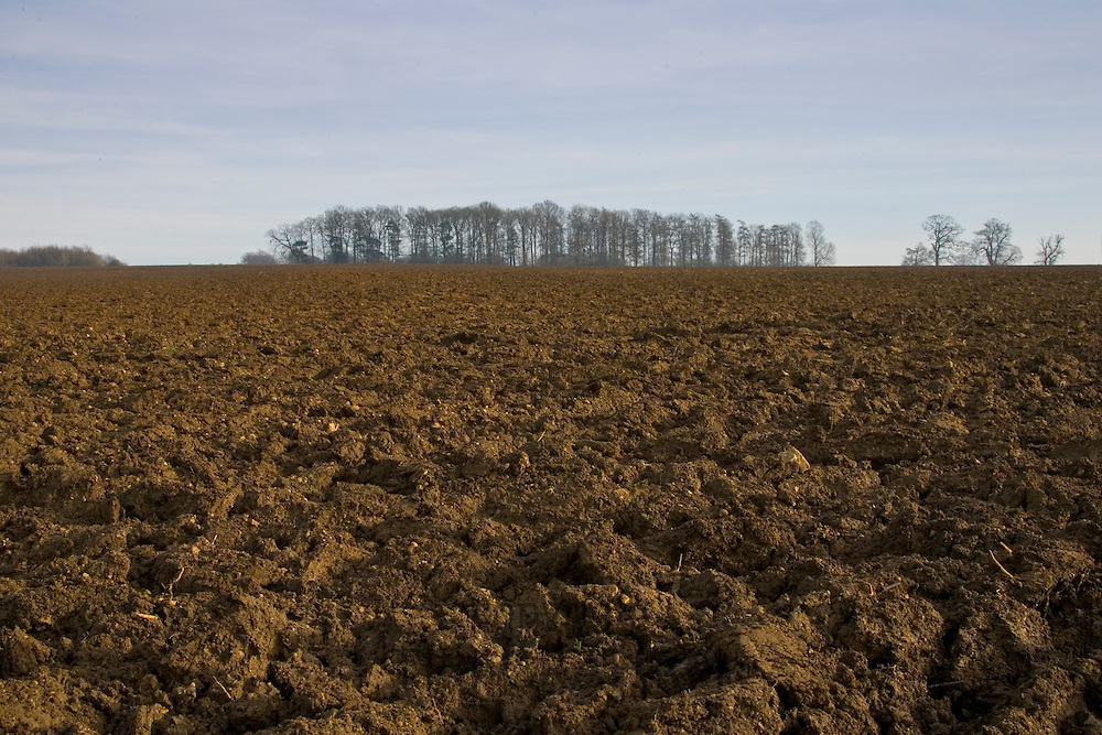 Ploughed field and copse, Gloucestershire, The Cotswolds, UK