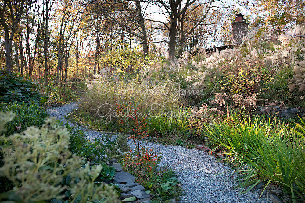 Meandering path back from middle of garden, past pond, to house.<br /> Spiky foliage: Iris Virginia<br /> Orange berries: Ilex verticillata &lsquo;Winter Gold&rsquo;<br /> Miscanthus bank with house roof line just visible<br /> Large trees by house are Sycamores.<br /> <br /> <br /> <br /> photography &copy; Andrea Jones