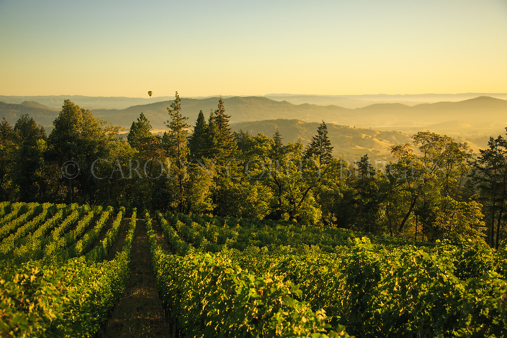 Sunrise over Clif Family Winery Croquet Vineyard on Howell Mountain in Napa Valley