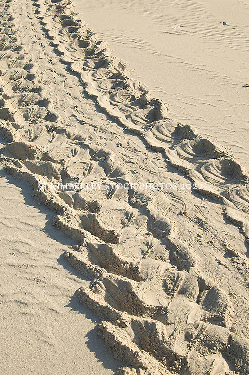 Turtle tracks in the sand on a remote Kimberley beach.  Sea turtles nest on Kimberley beaches at night