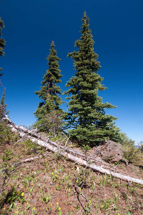 Desolation Peak View, North Cascades National Park, Washington, US