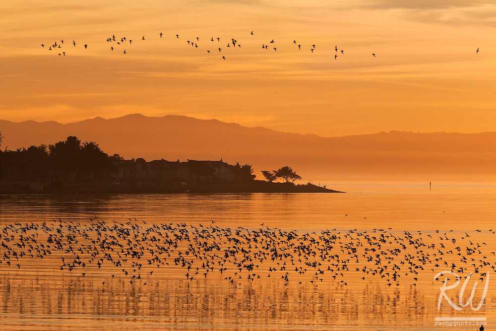 Elsie Roemer Bird Sanctuary at Sunset, Alameda, California