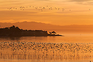 Elsie Roemer Bird Sanctuary at Sunset, Alameda, California
