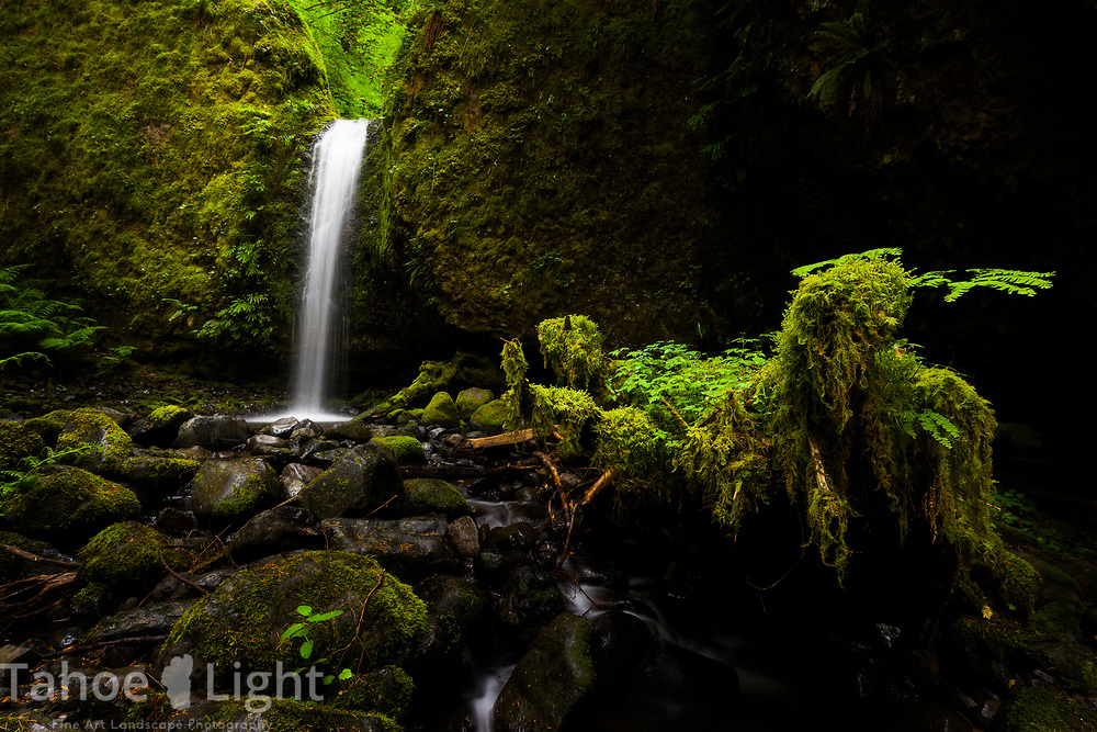Fern Falls Falls in the Columbia River Gorge in Oregon. This is off the trail waterfall is hard to find. The lush greenery and waterfalls of the Pacific Northwest are a must visit.
