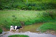 Prados_MG, Brasil...Paisagem rural com gado em Prados, Minas Gerais...Rural landscape with cattle in Prados, Minas Gerais..Foto: JOAO MARCOS ROSA / NITRO