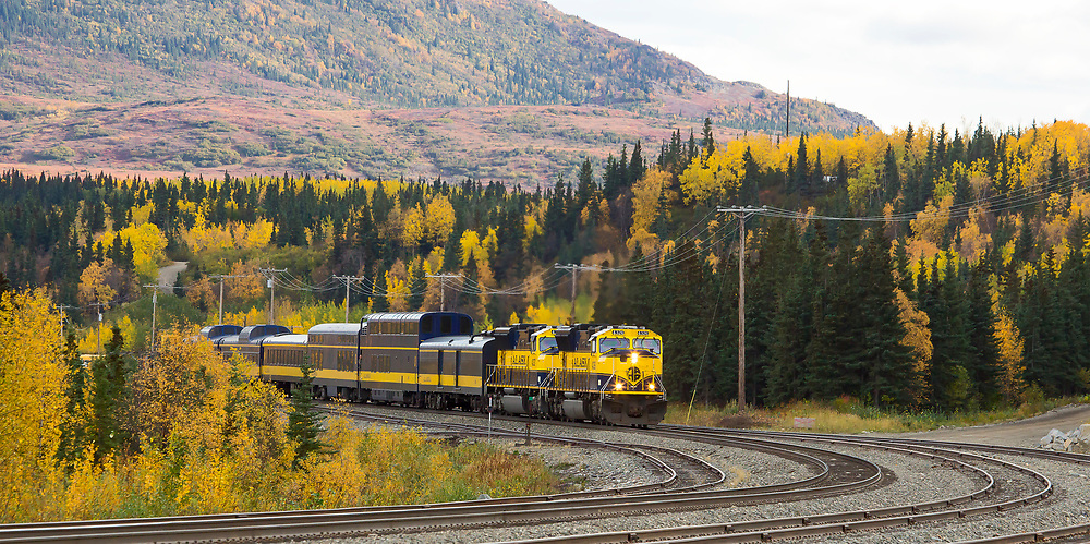 Alaska.  Autumn scenic of the Alaska Railroad rounding the curve toward Healy, north of Denali National Park.
