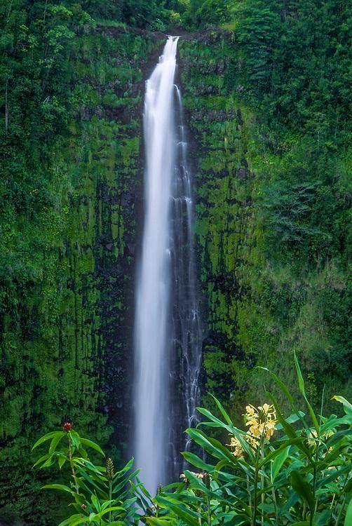 Akaka Falls, in Akaka Falls State Park; Hamakua Coast, Island of Hawaii.