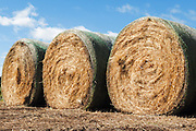 Round hay bales on a farm in rural Mingay, Victoria, Australia. <br />