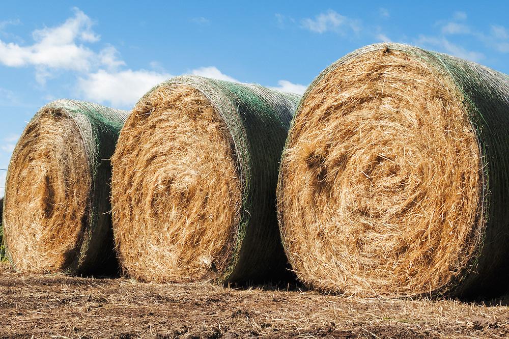 Round hay bales on a farm in rural Mingay, Victoria, Australia.