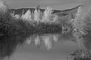 Indian Creek Below Taylorsville Bridge, Fall Leaves, Sierra Nevada Mountains, California rivers, willow trees, dark forest, alder trees, tuft of grass