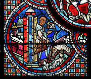 Lubin leaving Poitiers to tend to his sheep, holding a staff which prefigures his episcopal cross, from the Life of St Lubin stained glass window, 13th century, in the nave of Chartres cathedral, Eure-et-Loir, France. Lubin was a monk in the 6th century who became bishop of Chartres. Chartres cathedral was built 1194-1250 and is a fine example of Gothic architecture. Most of its windows date from 1205-40 although a few earlier 12th century examples are also intact. It was declared a UNESCO World Heritage Site in 1979. Picture by Manuel Cohen