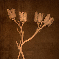 Dried Flowers and stems