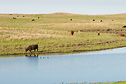 Prairie pothole and waterfowl, McPherson County, South Dakota