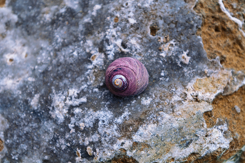 Shell on rock at Sand Dollar Beach, Los Padres National Forest, Big Sur, California