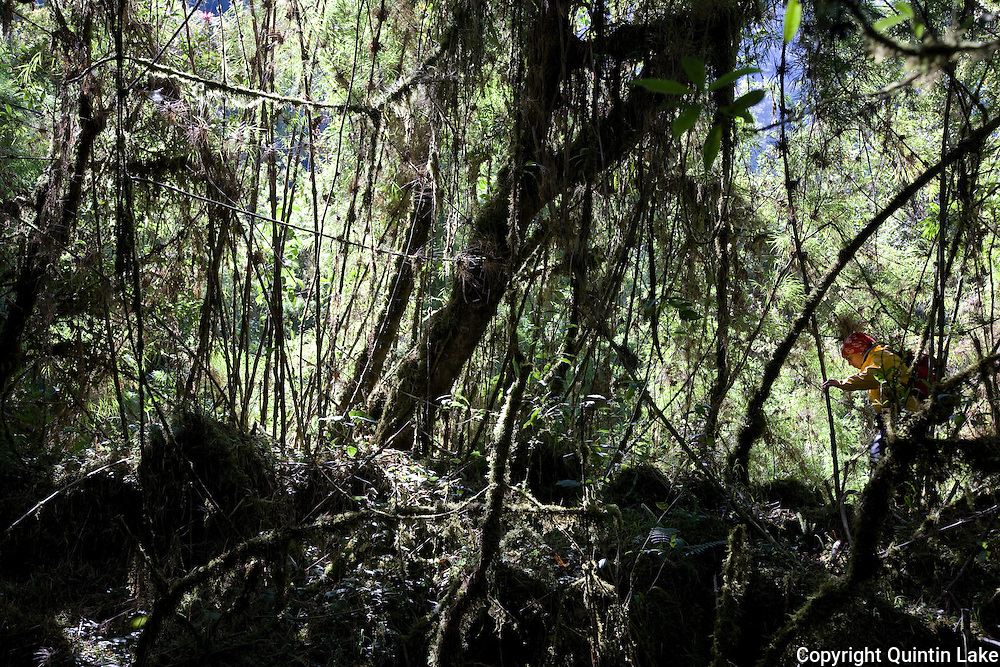 Rosa Maria Roman-Cuesta explores the cloud mountain forest near Marcapata next to the Interoceanic Highway