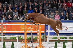 041, Chaperon RV Z<br /> KWPN hengstenkeuring - 's Hertogenbosch 2020<br /> © Hippo Foto - Dirk Caremans<br />  29/01/2020