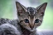 Adorable tabby kitten portrait.