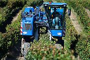 mechanical harvesting of grapes for wine France Languedoc Aude Razes