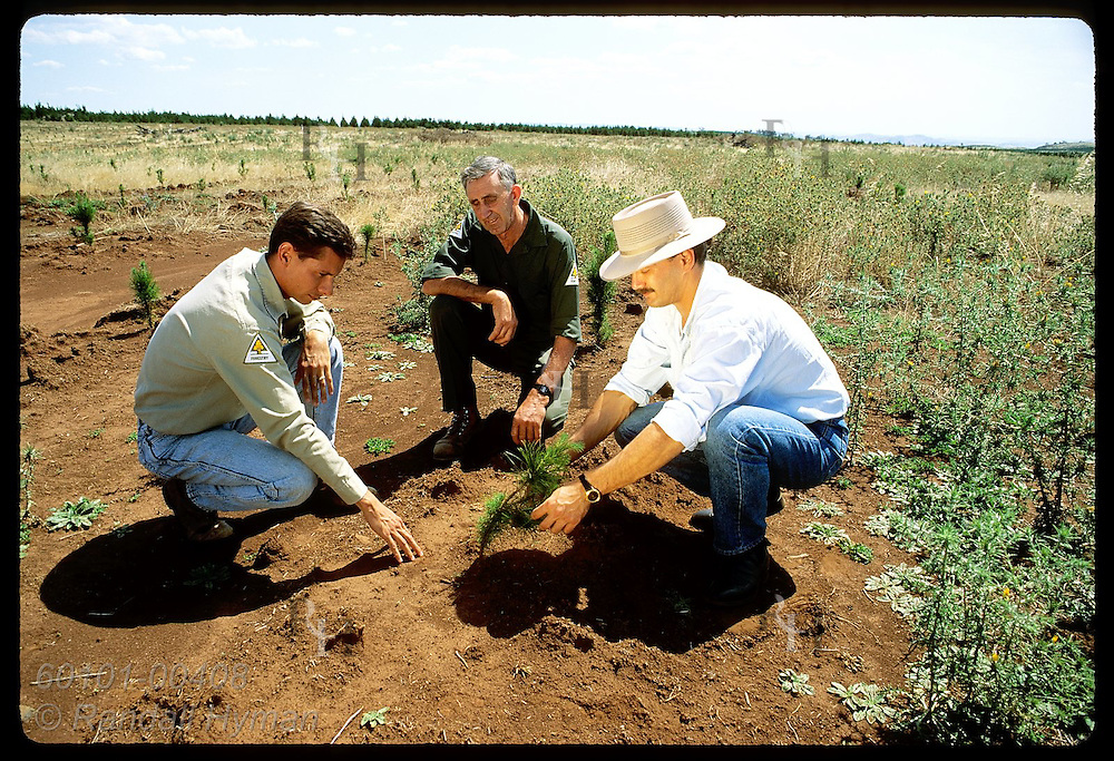 Monsanto rep and foresters study pine seedling in nursery treated w/ herbicide;Tumut District, NSW Australia