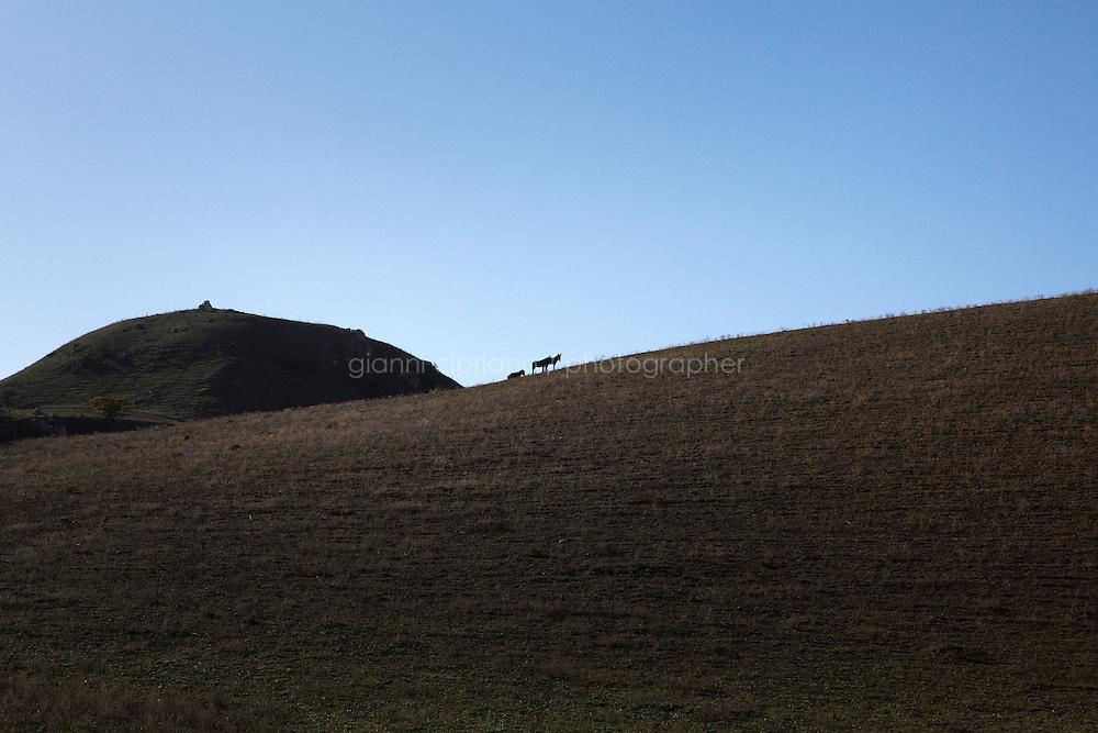 MINEO, ITALY - 14 NOVEMBER 2014: Donkeys on a hill nearby Mineo, Italy, on November 14th 2014.