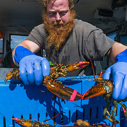 Captain Richard Smith ('Bad Behavior') unloads lobster at Great Wass Lobster in Beals, Maine.